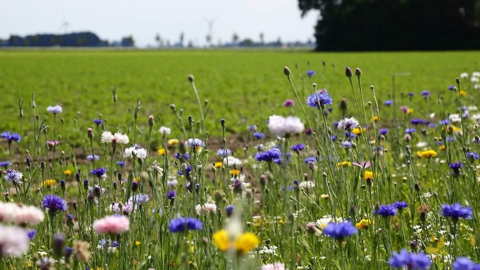 Zeven maatregelen voor Noord-Hollandse boeren die biodiversiteit ...